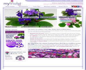 Myviolet